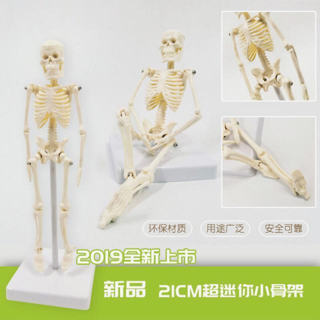 human anatomy|anatomy humanhuman anatomy model